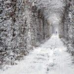 6967 Куда поехать на День Валентина: топ-5 романтических мест Украины