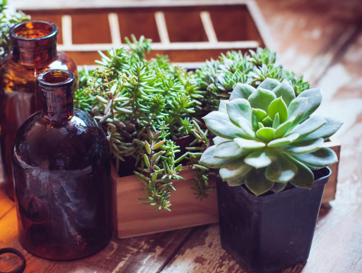 9027 Спасительная влага: чем полезна кактусовая вода для кожи
