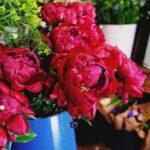 16557 Пионы фото цветов букеты красивые