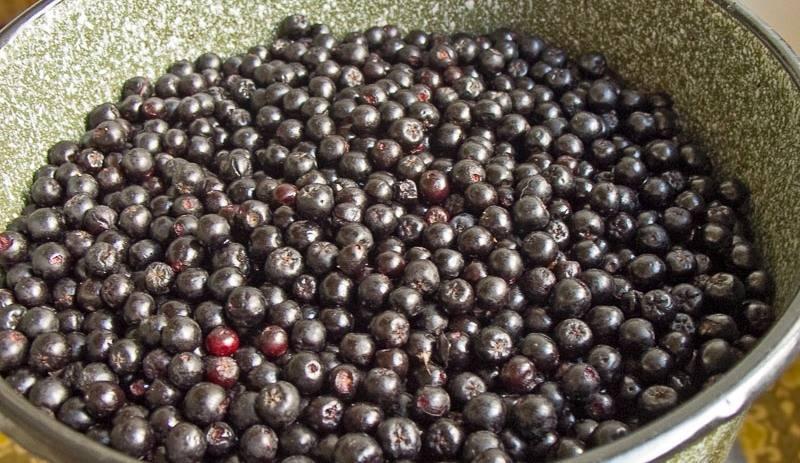 16863 Черная рябина вино в домашних условиях рецепт